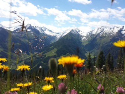 Alpen winter sneeuw zomer