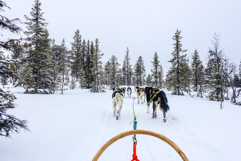 Hondensledetocht tijdens een wintersport in Trysil