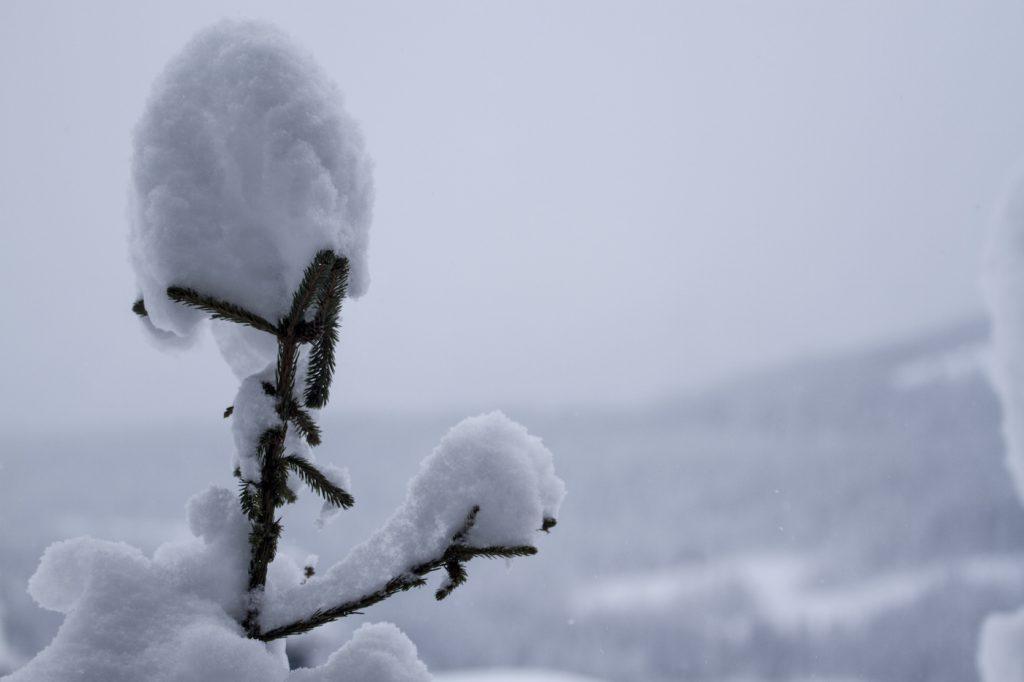 Wintersport boeken sneeuwzekere skigebieden